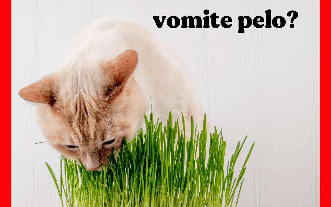¿Es normal que mi gato vomite pelo?