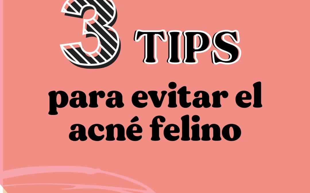 3 Tips para evitar el acné felino